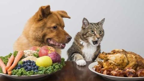 Cane e gatto, se lo ami lo curi: le buone regole della convivenza – Meteo Web
