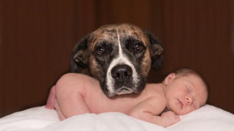 Cani e neonati: pericoli – La Legge per Tutti