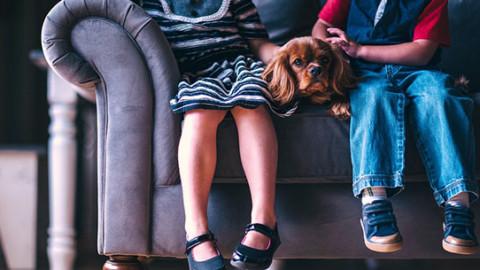 Cani e Alzheimer: i segnali più comuni – GreenStyle