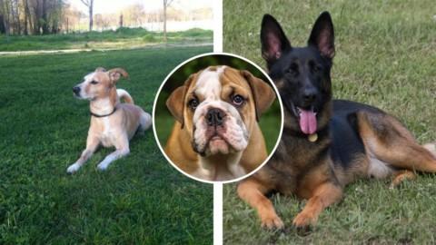 Cani, il falso mito dei sette anni rispetto all'età dell'uomo: ecco qual … – Il Messaggero