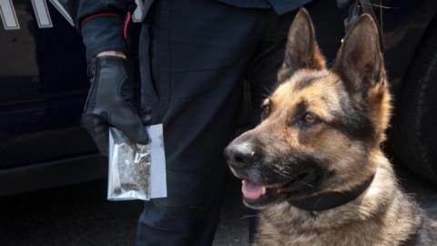 La marijuana non 'sfugge' al fiuto del cane, nei guai 46enne di … – Leccenews24