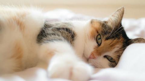 Gatto: 5 motivi perché evita la lettiera – GreenStyle