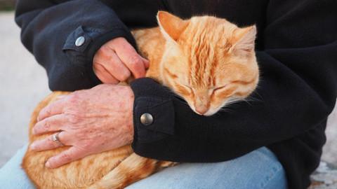 Cani e gatti: 5 cambiamenti per migliorarne la vita – GreenStyle