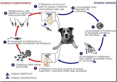 La prevenzione da filaria e leishmania nel cane