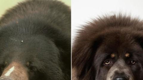 Compra un cane e scopre che è un orso: perplesso per le … – Blasting News