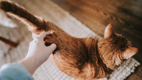 Perché anche il gatto scodinzola? – GreenStyle