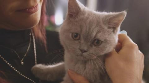 Matrimonio a Prima Vista 3, il gatto di Roberto e Daniela un british … – Sky Tg24