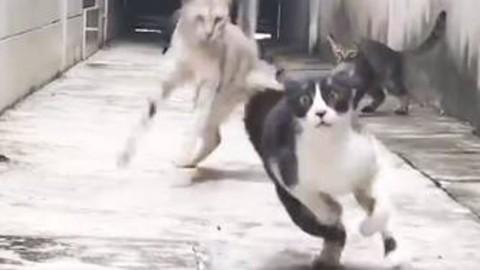 Gatto evita l'attacco di quattro felini, una scena da film di arti marziali – La Stampa