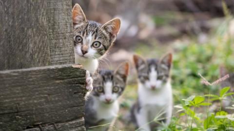 Questioni feline: gatti, condominio e colonie feline – Studio Cataldi