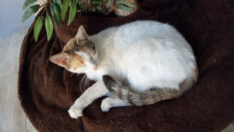 Un gatto avvelenato, altri spariti: anche a Vasto il sospetto dei … – Zonalocale (Comunicati Stampa)