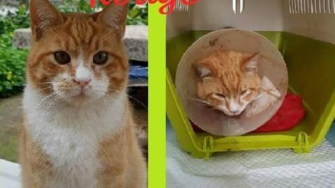 Palermo. Villatasca: tornano gli episodi di violenza sui gatti – ilSicilia.it (Comunicati Stampa) (Blog)