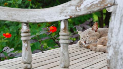 Chi lascia il gatto all'aperto è poco eco-friendly: lo studio – GreenStyle