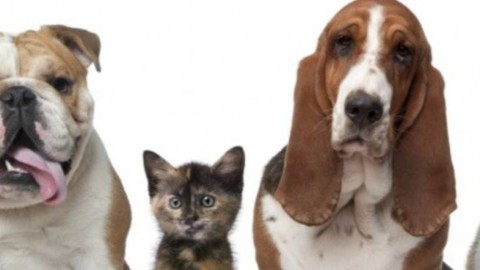Elaborazione del lutto quando muore un cane o un gatto: se ne … – Il Vostro Giornale
