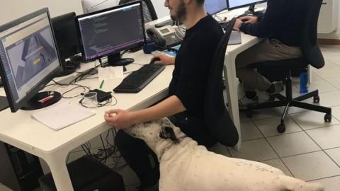 Tekapp, un'azienda a Formigine dove puoi portare il tuo cane in ufficio – Gazzetta di Modena