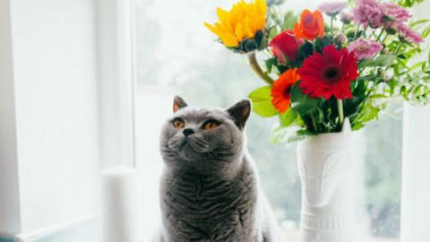 Cani e gatti: 7 pericoli casalinghi – GreenStyle