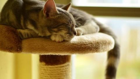 Come scegliere il migliore tiragraffi per gatti – MondoGatti.com (Blog)