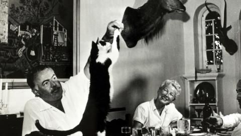 HemingwayDays / I gatti di Ernest – Varese Press – giornale online