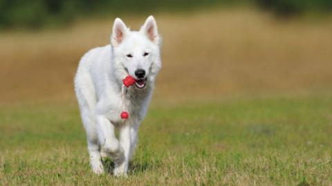 Cani e gatti: 5 benefici per la salute umana – GreenStyle