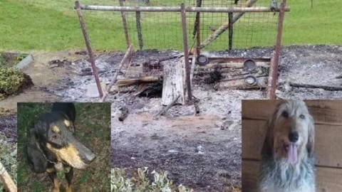 Sondrio, due cani bruciati vivi perché abbaiavano troppo – il Giornale