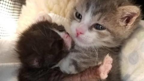 Un gatto che è sopravvissuto alla sfortuna ora aiuta i gatti in difficoltà – Fidelity News