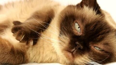 Che cos'è un gatto? – Il Foglio