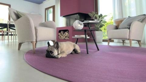 Pazzi per i bulldog francesi, i 10 consigli per proteggere i cani dal … – ANSA.it