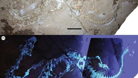 Ritrovato il fossile di un rettile marino preistorico in Puglia – DARLIN MAGAZINE