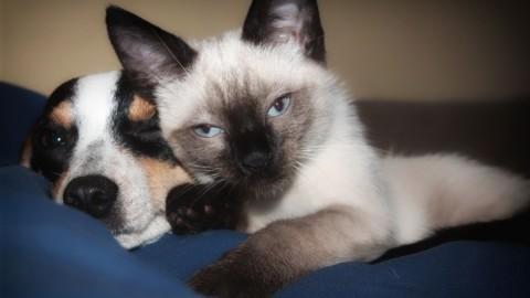 """Dall'Inghilterra: """"Il cane più intelligente del gatto"""" – tio.ch"""