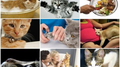 Alcuni miti da sfatare sui gatti, fra false credenze e pregiudizi – 7giorni