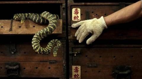 Compra online un serpente velenoso: viene morso e muore – Globalist.it