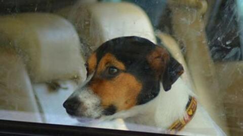 Lasciano i cani in auto con 35 gradi – Il Resto del Carlino
