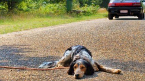 Diecimila euro di multa e rischio arresto per abbandono animali – Fidelity News