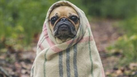 Rassegnatevi, i cani non sono persone – Il Foglio