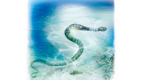 Il serpente dal becco killer – National Geographic Italia