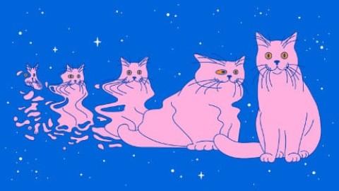 I gatti di Schrödinger dal mondo quantistico alla vita reale – Le Scienze