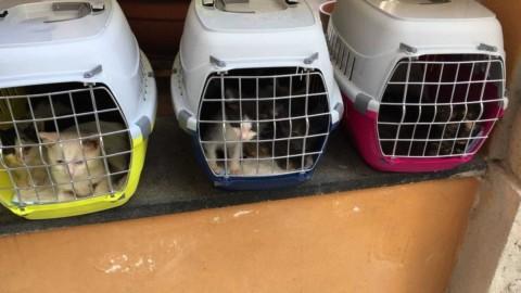 Gatti in fila per sei col resto di due – La Repubblica