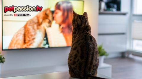 Film e gatti, i 5 mici da Oscar più famosi – Petpassion.tv