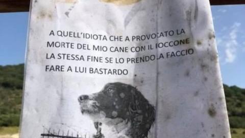 Troppe polpette avvelenate: gli appelli per salvare i cani – Il Messaggero