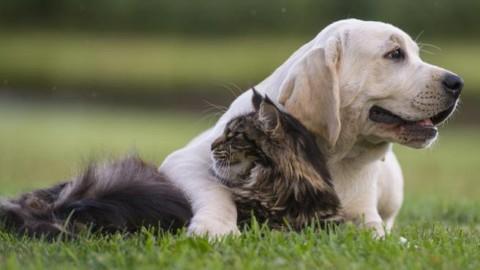 Cani e gatti, sterilizzarli o no? Cosa cambia nell'alimentazione – Corriere della Sera
