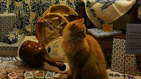 Santarcangelo, è morto Birra, il gatto star del borgo – Il Resto del Carlino