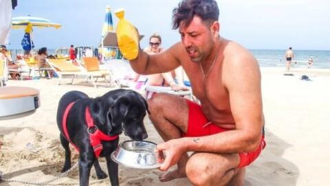 Cani al mare a Rimini, è battaglia sui bagni riservati a Fido – Il Resto del Carlino