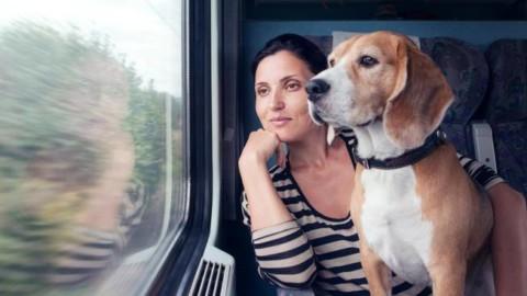 Vacanze in treno, il cane viaggia gratis: l'iniziativa anti-abbandono – Corriere della Sera