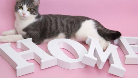 Come si arreda la casa per un gatto felice – Vanity Fair.it