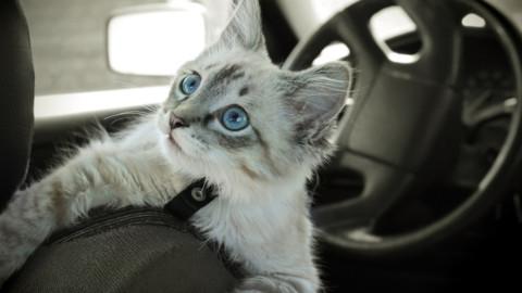 Quixa protegge gli animali in auto – Insurance Trade