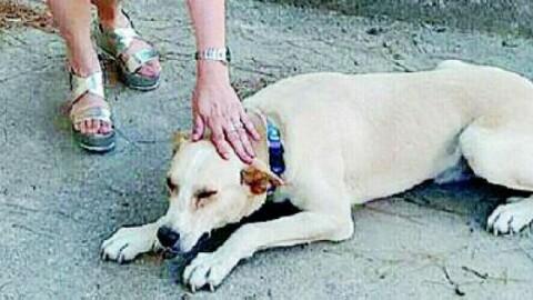 Cani abbandonati in estate il servizio costa 40mila euro l … – La Gazzetta del Mezzogiorno