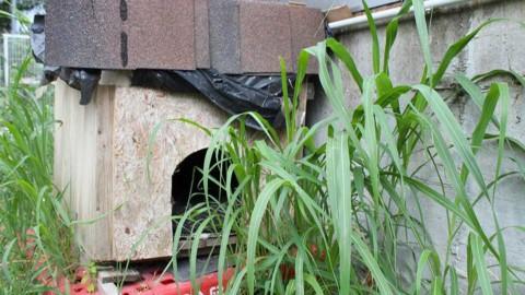 I gatti del Sindaco, cento colonie feline che il Comune ha adottato – Verona In (Comunicati Stampa)