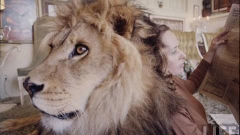 Il Leone Domestico: 16 fotografie di Melanie Griffith e famiglia con … – Vanilla Magazine