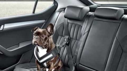 Accorgimenti utili in compagnia del vostro animale in auto – Agenpress