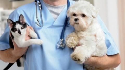 Vaccini estivi cani e gatti: modi e tempi di somministrazione – Money.it