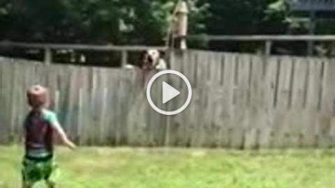 Il bambino e il cane dei vicini: il gioco da una parte all'altra della … – Corriere della Sera